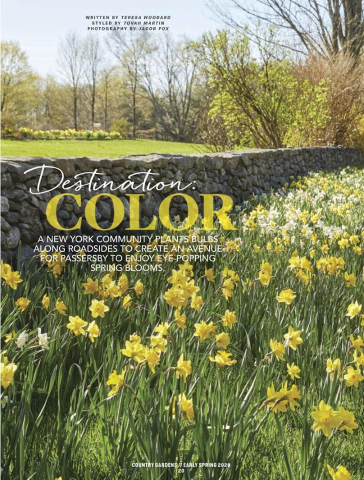 Country Gardens magazine cover: daffodils blooming in front of stone wall, [part of the Golden Roads project in Lewisboro, NY
